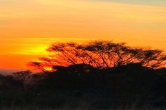 African-Sunset-in-the-Bush