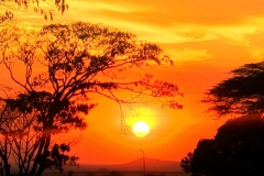 Sunset in the African Wild