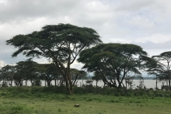 Acacia Riverline Vegetation