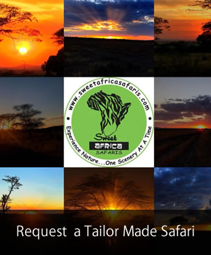 Tailor Made Safari